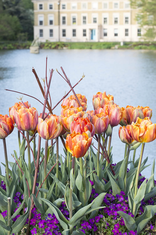 kew-gardens-flowers2
