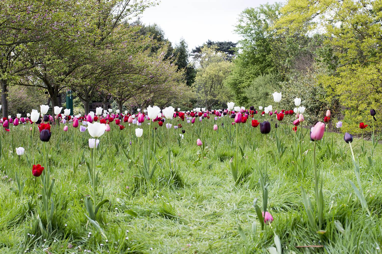 kew-gardens-flowers3